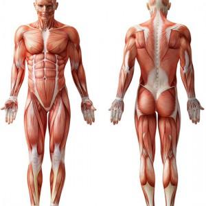 anatomy-003