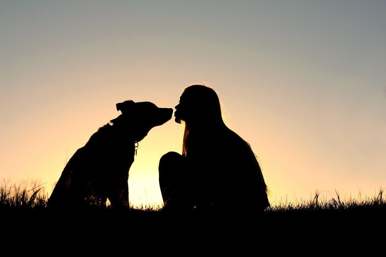 silhouette of a dog and a girl