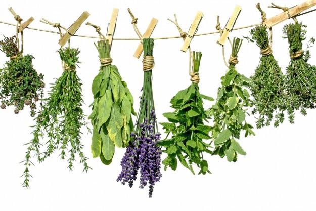 SNHS The Wonders of Herbalism