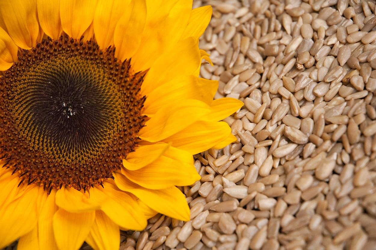 Sunflower Seeds - Top 12 foods for a clear complexion