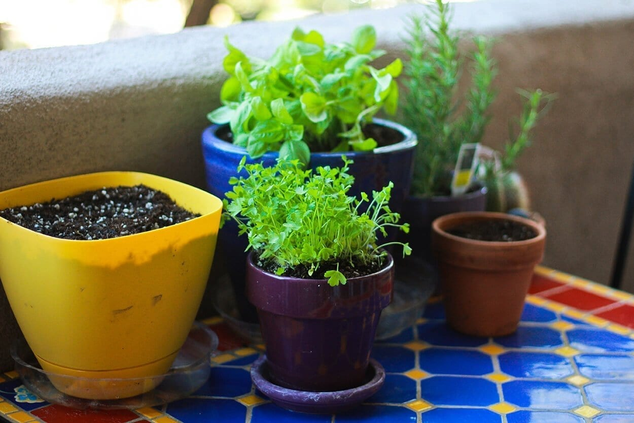 Gardening - Top trending crafts for stress relief