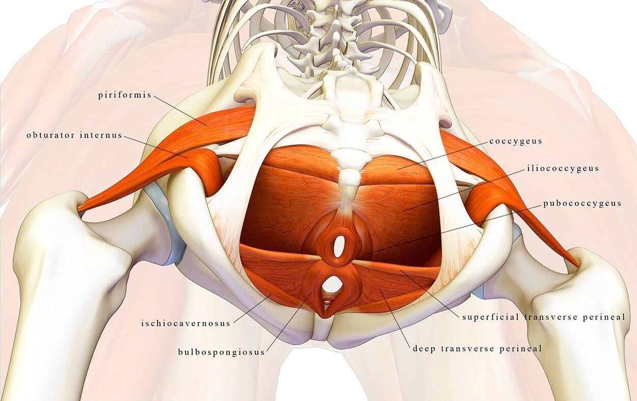 The Low Down On Our Pelvic Floor