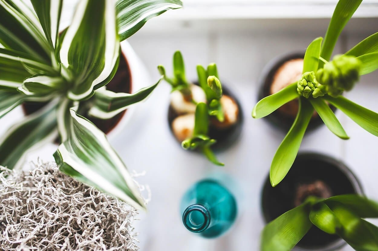 Natural air purifiers - indoor plants