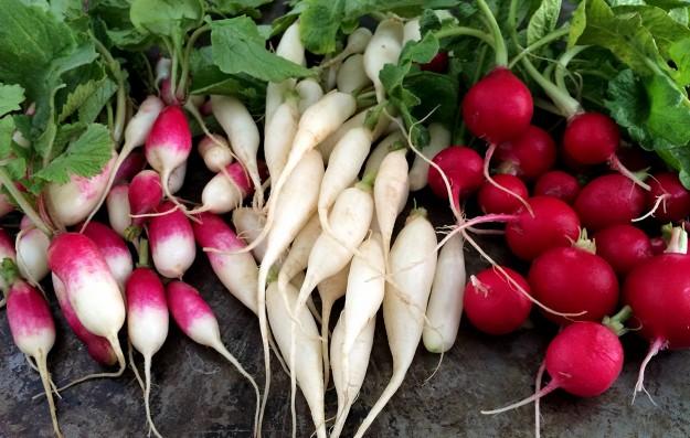 different types of radish