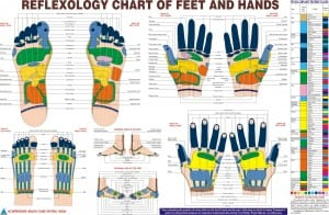 SNHS reflexology chart