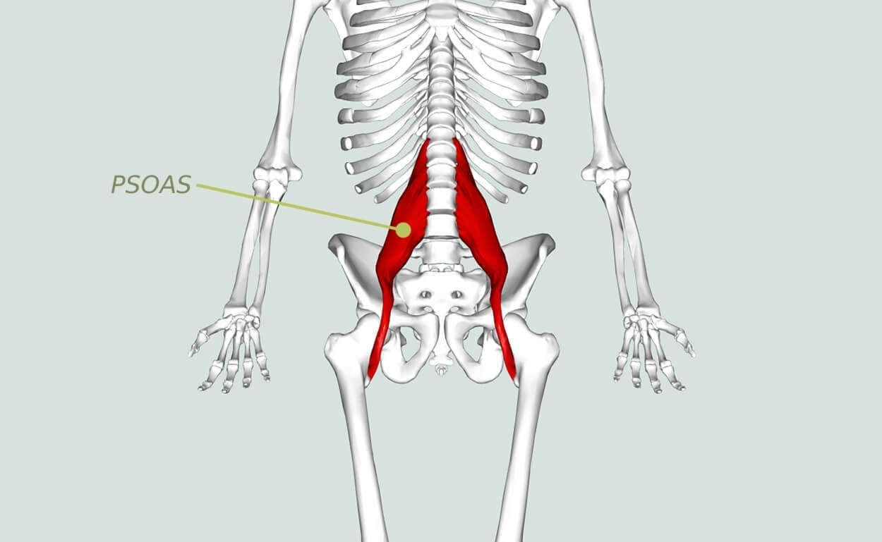 psoas the muscle of the soul