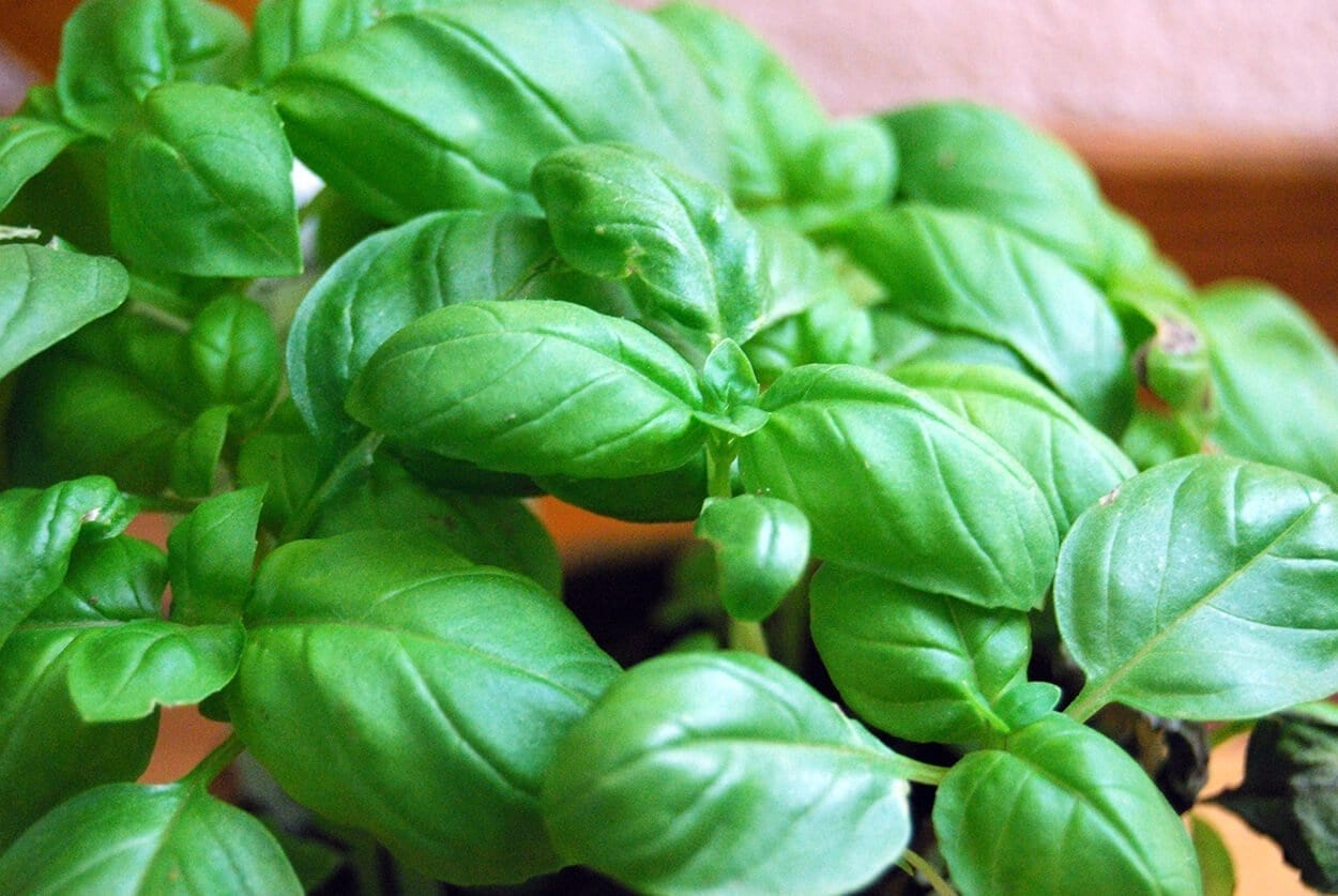Kitchen herbs that heal