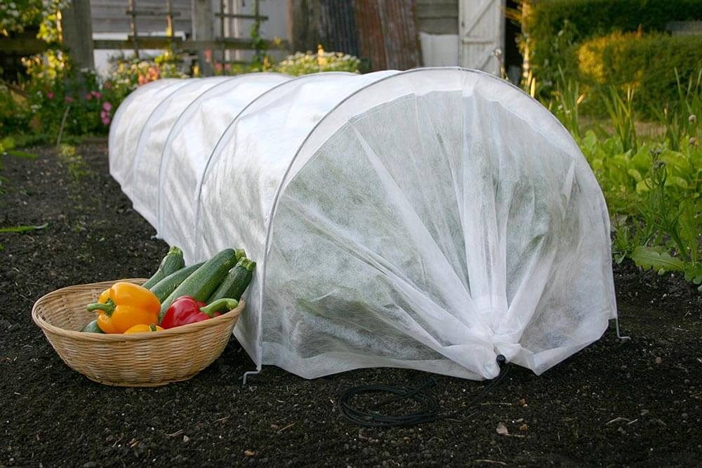 plants covered with a drape