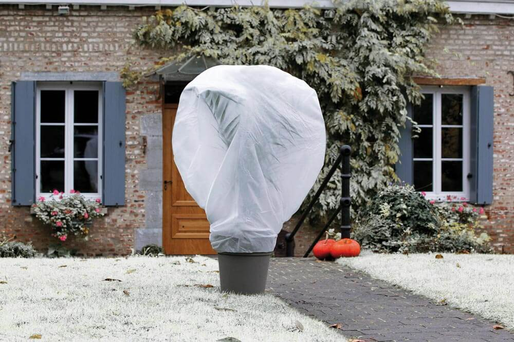 plant wrapped in white cover