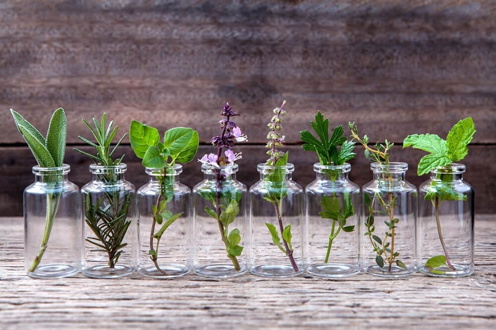 herbs for essential oils
